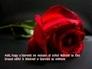 437876_54746_n_1