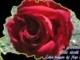 405223_55733_1