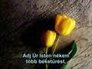 557711_88041_n_1