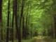 Jákó Vera: Zöld erdőben kék ibolya