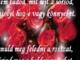 Csodálatos virágok és szép idézetek.november23.15 ora