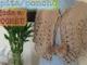 Capita tejida a Crochet/Ganchillo