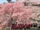 Mike Oldfield zenéjére - Az erdő fohásza