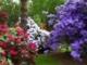 Virágos kert az én szívem - Zárai Márta