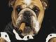 Megugat a bodri kutyám
