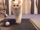 Macska és a futópad