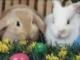 Kellemes húsvéti ünnepeket _