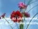 Boldogmondások (Hegyi beszéd - Máté evangéliuma 5.)