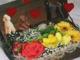 Virágos  uszkárok