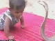 Bébi és a kobra összetűzése