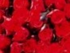 Millió Rózsaszál ...