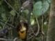 Esőerdők  -  5/1.rész  ( BBC - Planet Earth)
