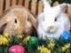 Áldott Húsvétot kívánok ...