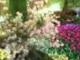 Gubik Mira - Tavasszal ha kinyílnak a fehér gyöngyvirágok