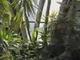 Nyíregyházi Botanikus kert.