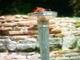 Olimpiai láng meggyújtásának ceremóniája, 2008.